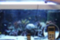 HVP aqua T5 vs LED