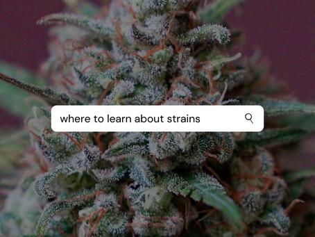 Dónde conocer más sobre variedades de Cannabis