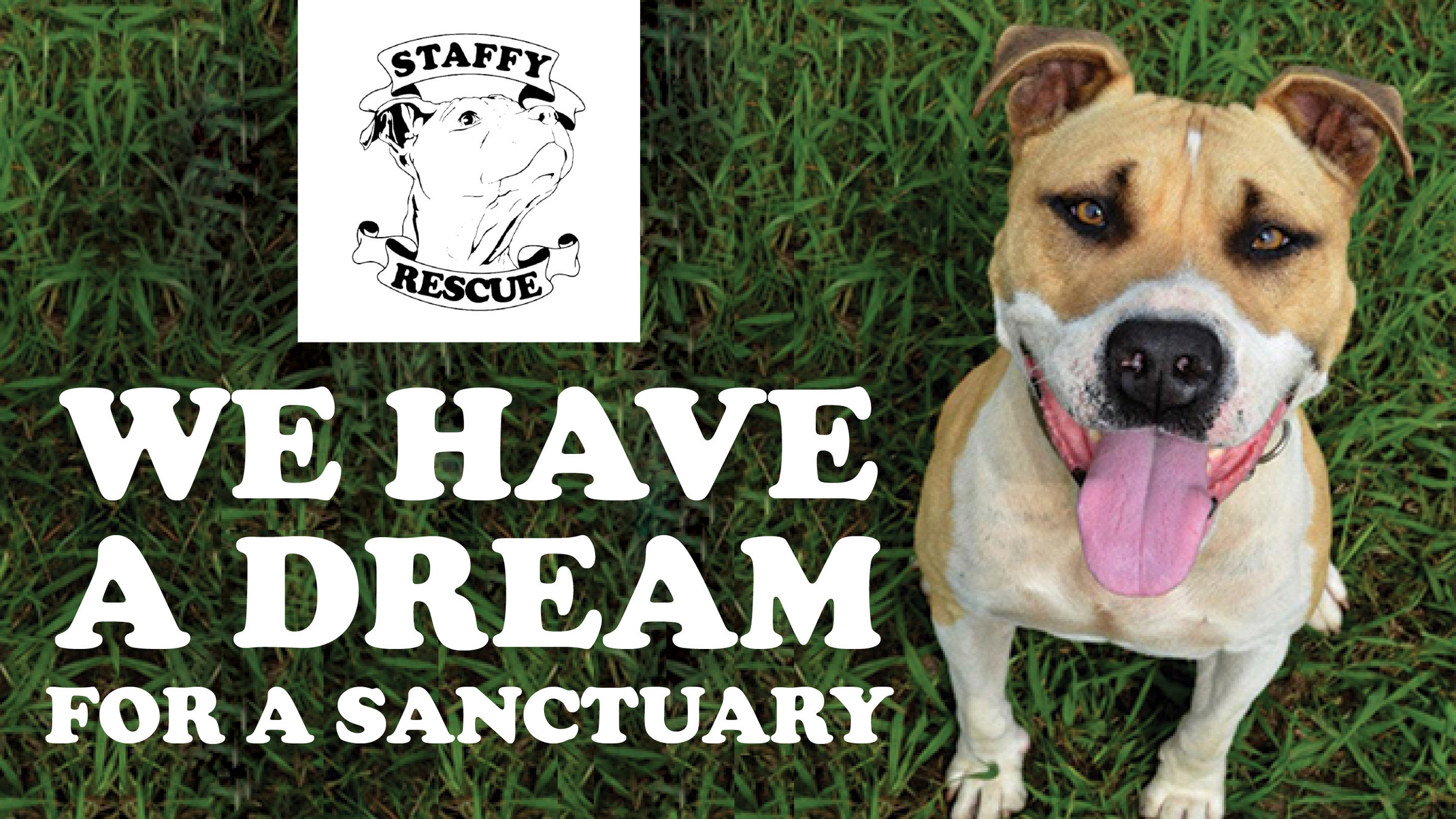 Staffy Rescue - Home