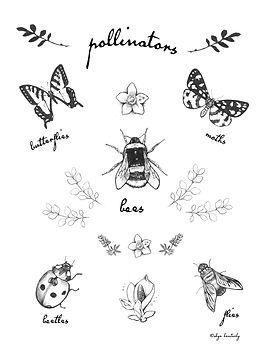 pollinator poster ex8.jpg