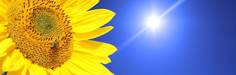 Better World Club sunflowers