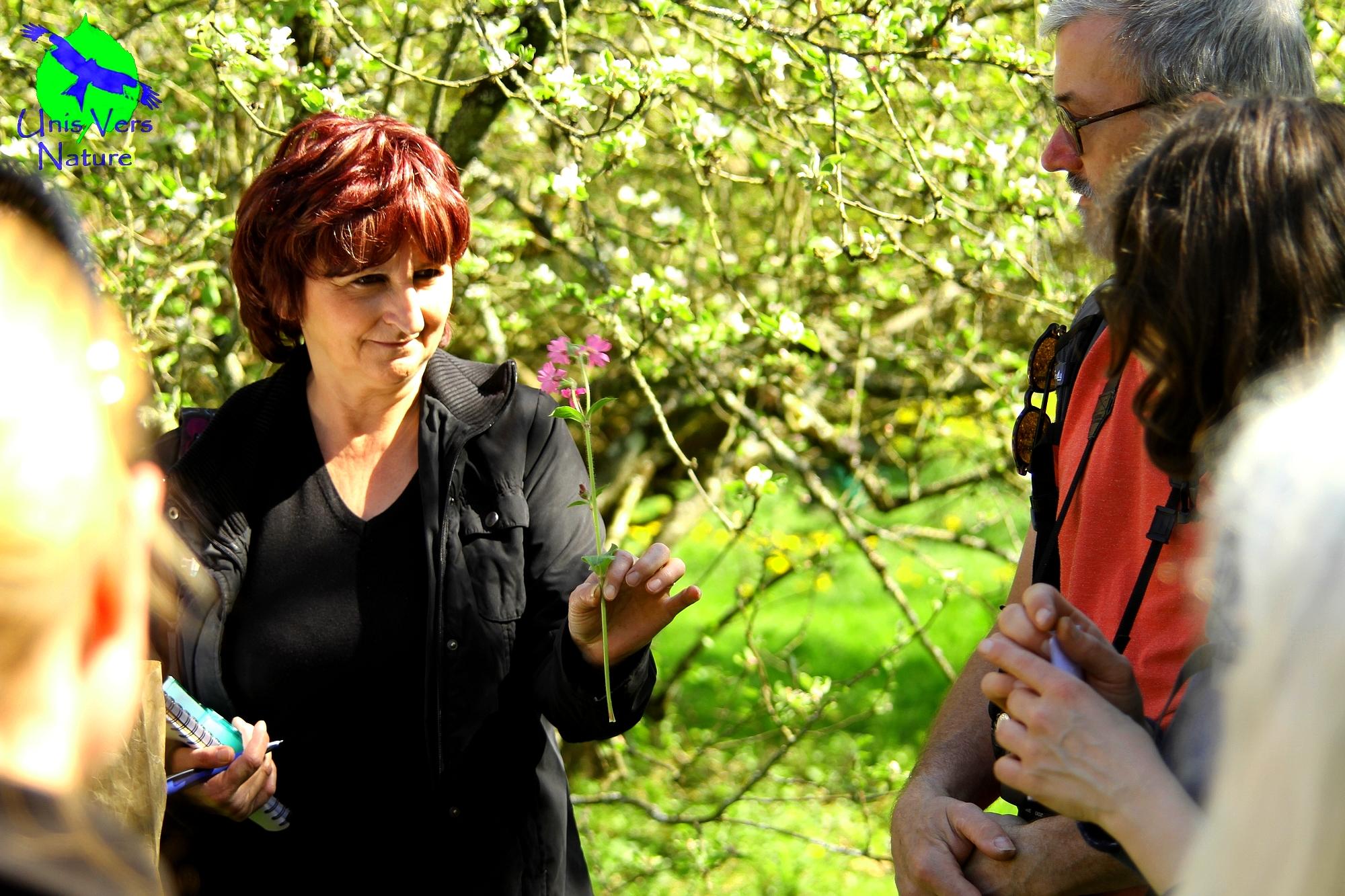 balade botanique et cueillette