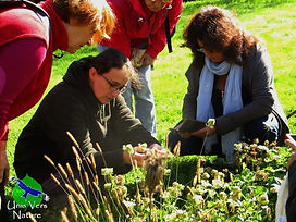 Stages plantes sauvages comes Unis Vers Nature balade botaniquesibles