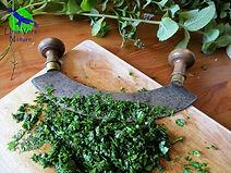Stage Cuisine plantes sauvages comestibles recettes