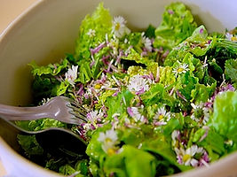 Salade stage plantes sauvages comestibles