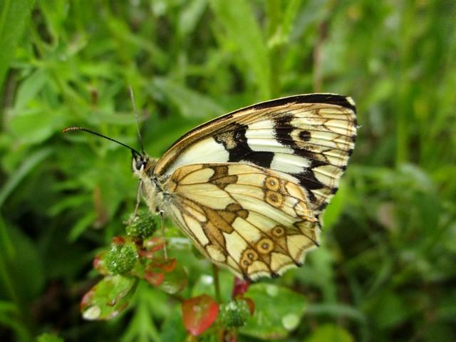 Papillon, le symbole de l'âme