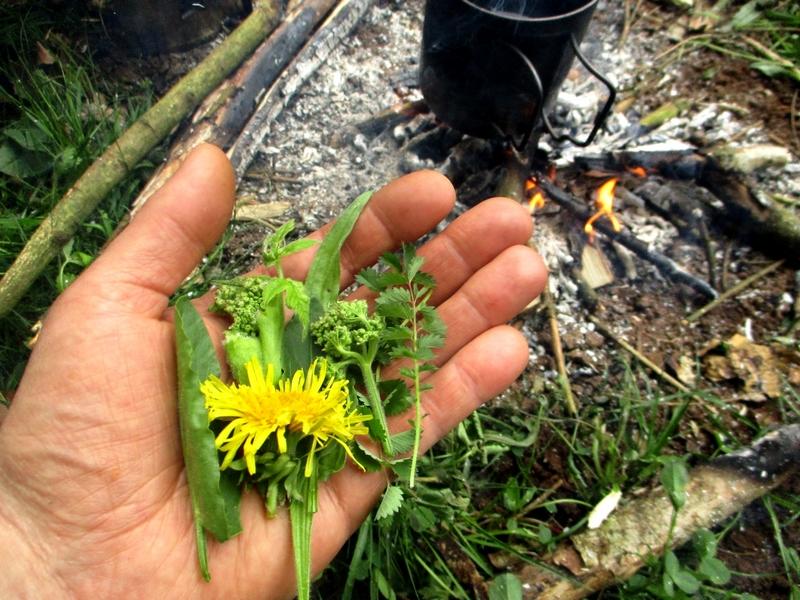 Richesse des plantes sauvages