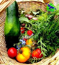 Potager_bio_permaculture_plante_sauvage.