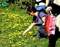 weekend plantes sauvages et bien-être