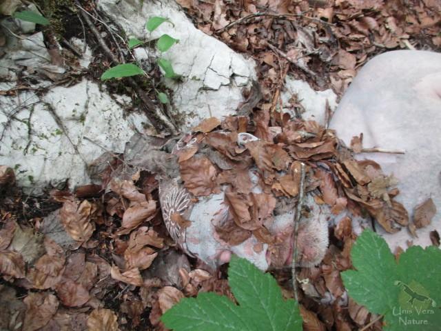 Technique primitive de camouflage