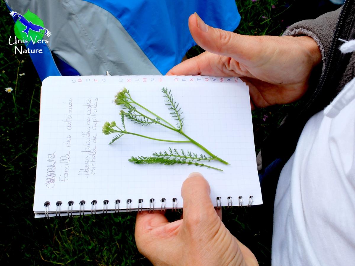 identification plantes sauvages
