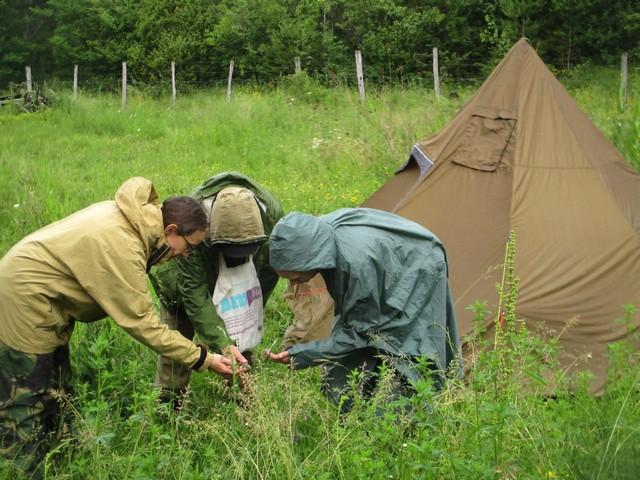 Cours d'identification de plantes sauvages