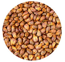 ブドウ種子_3x-100.jpg
