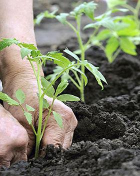 come-coltivare-un-orto-sinergico.jpg