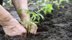 come-coltivare-un-orto-sinergico