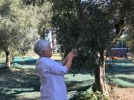 foto raccolta olive 3.jpg