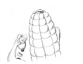 corn_4.jpg