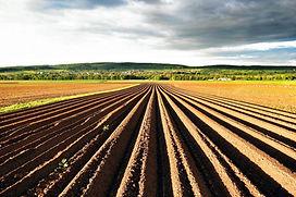agricoltura_biologica.jpg--.jpg