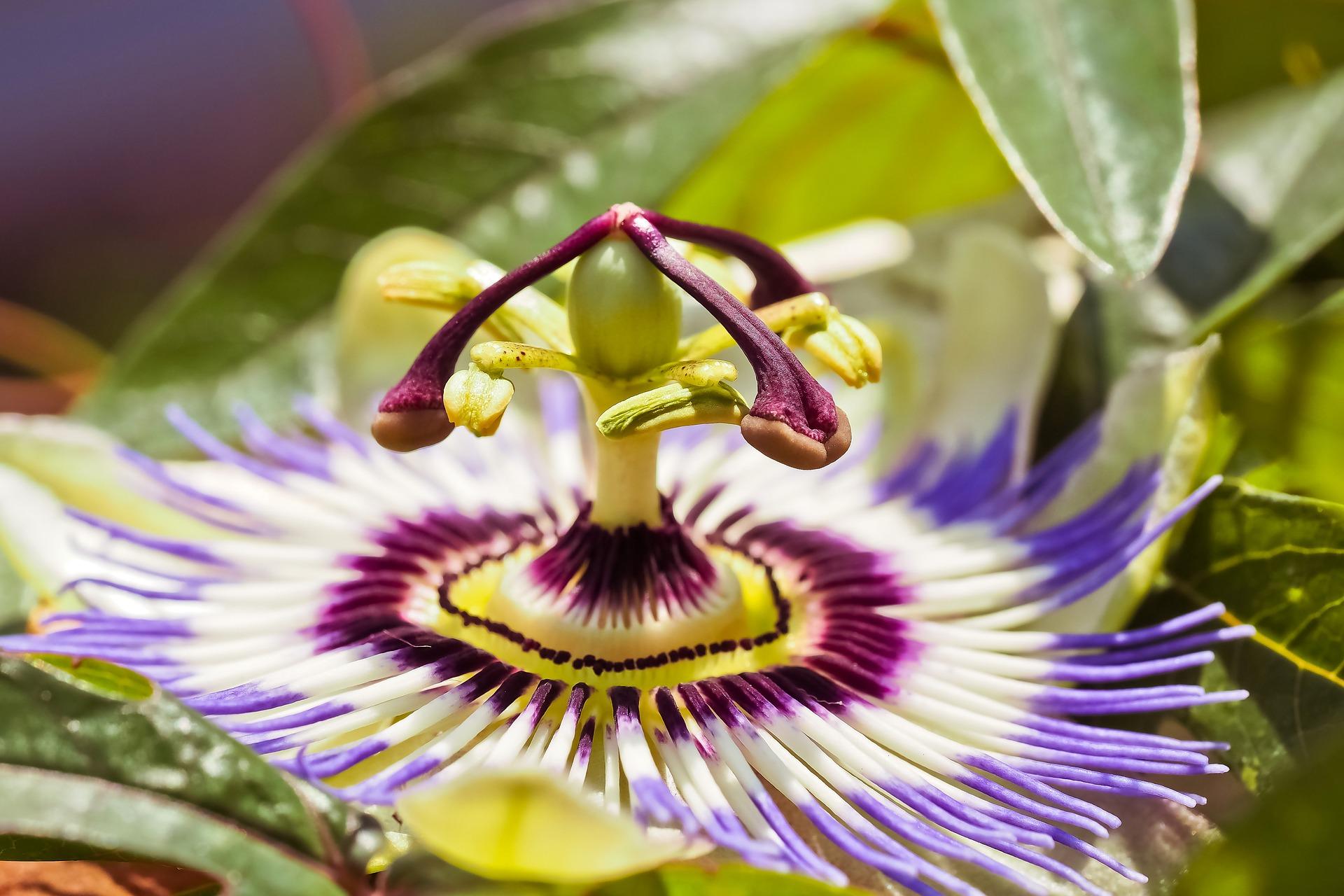 flower-3466146_1920