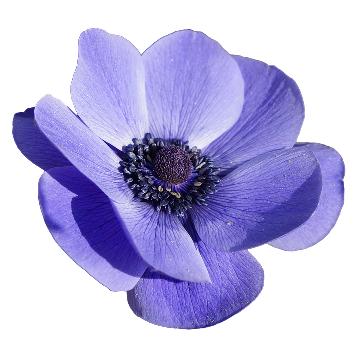 flower-1978167_960_720