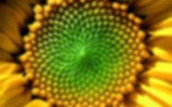 centro_giallo_verde.jpg