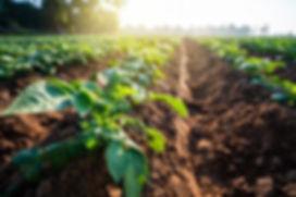 agricoltura1-768x512.jpg