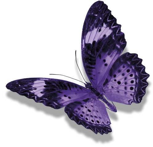 farfalla widdar guarda a sinistra