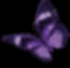 farfalla widdar guarda a sinistra.png