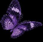 farfalla widdar guarda a destra.png