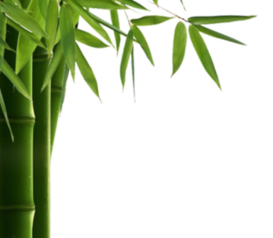 bamboo-png-2.png