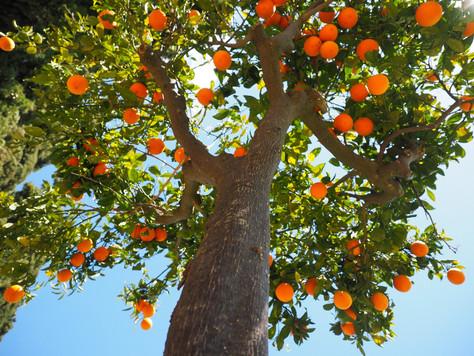 Perchè trattare in autunno i fruttiferi
