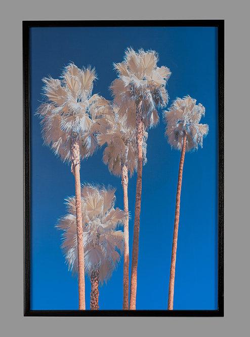Palm Bouquet 16x24