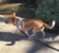 Dolly taking a walk