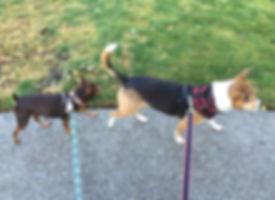 Cody & Arnie on their dog walk