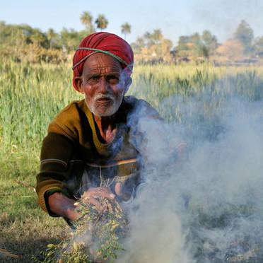 Grand-père grillant des lentilles vertes