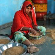 Tamisage du blé