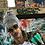 Thumbnail: Camo Sirens