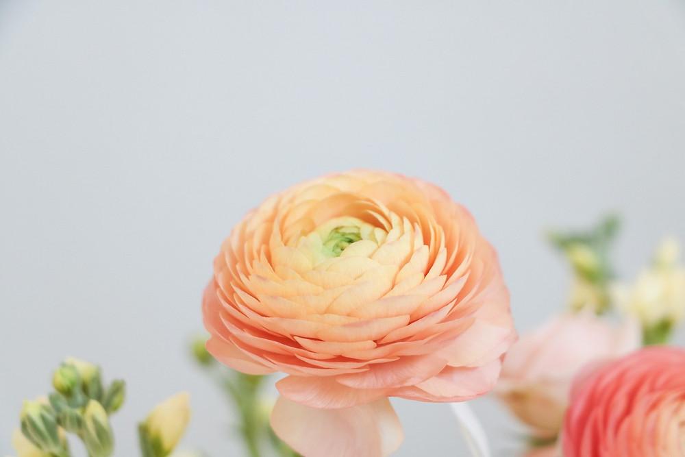 peach ranunculus detail by studio bloom iowa