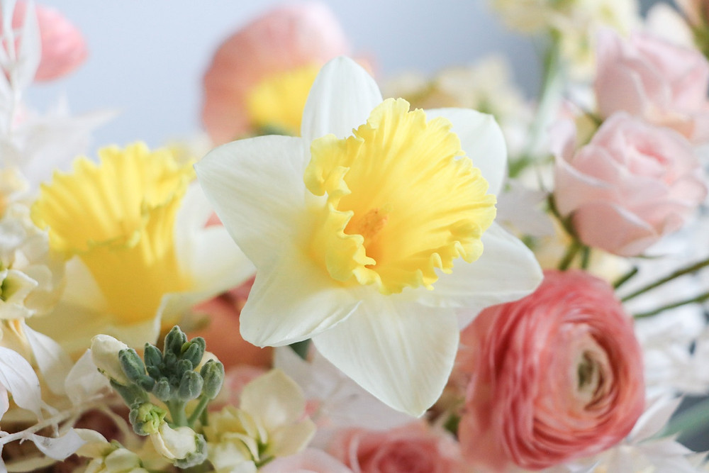 yellow and white daffodils and peach ranunculus detail by studio bloom iowa