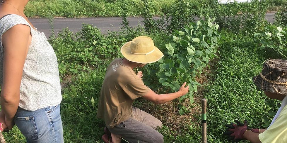 『自然農とパーマカルチャー講座』 〜自然と調和した暮らしをはじめよう!〜
