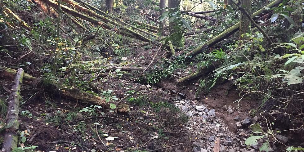 森や住まいの、水と空気の健全な循環による環境改善・再生の実践的な学び
