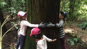 森と踊るは「森の声を聴く間伐」にシフトします