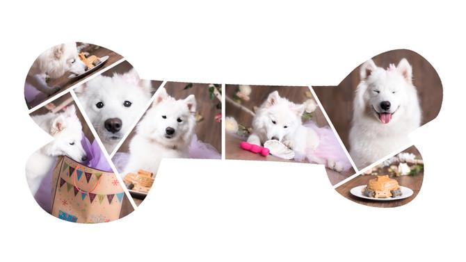 A Puppy's 1st Birthday