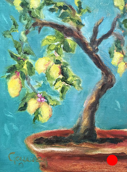 """Lemon Tree at La Consuma"""