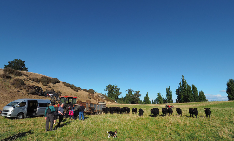 Cattle Station (Ranch)