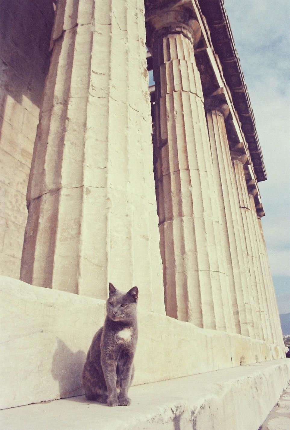 cat athens.JPG