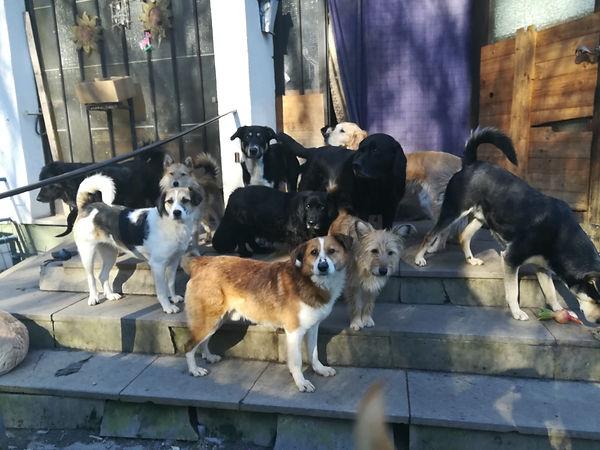 Hundegruppe Daniela.jpg