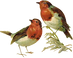 Victorian_birds_1_quaddles_by_quaddles.p
