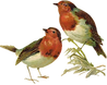 Victorian_birds_1_quaddles_by_quaddles.p