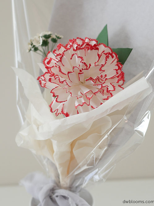A stem of red and white carnation